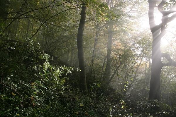 Ponúknime verejnosti príbeh obnovy lesa